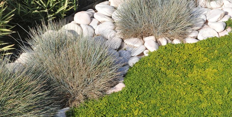Ornemental grass weed garden Cabries 13